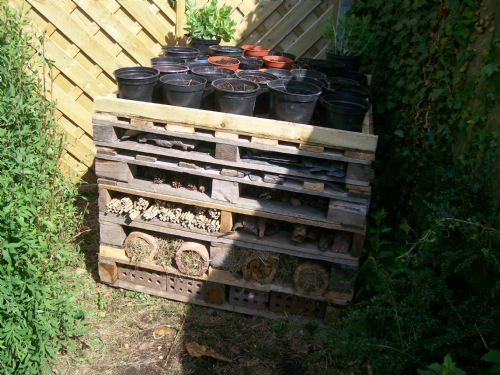 image - Bug Hotel (June 11)